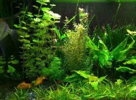 Почему растения в аквариуме плохо растут?