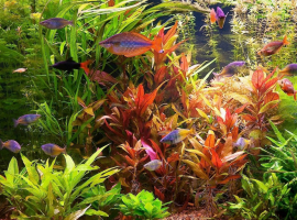Совместимость аквариумных растений