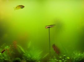 Зеленый налет на стенках аквариума: как избавиться?