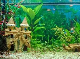 Почему вода в аквариуме мутнеет и что с этим делать?