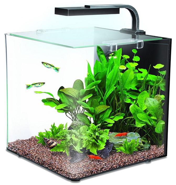 правильным нано аквариум фото увидел красивые