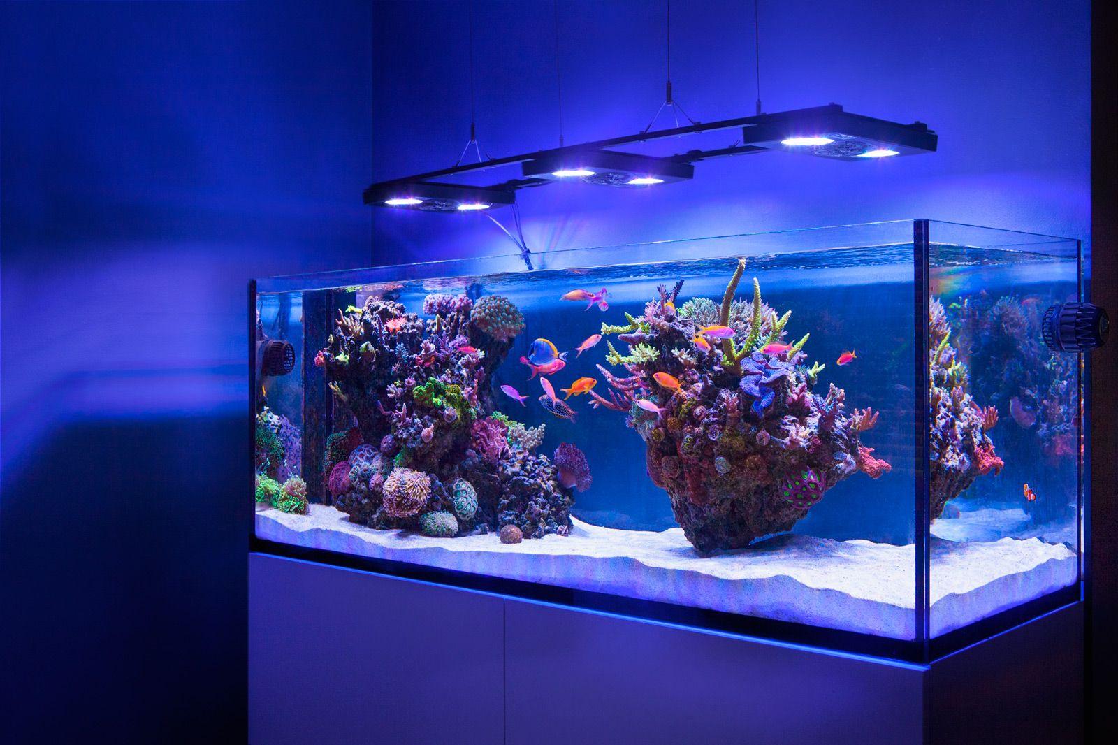 предполагают, картинки с видами аквариумов всего